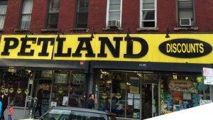Petland Discounts Headquarters 1